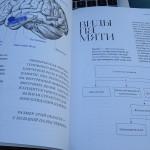 работа мозга и принципы запоминания